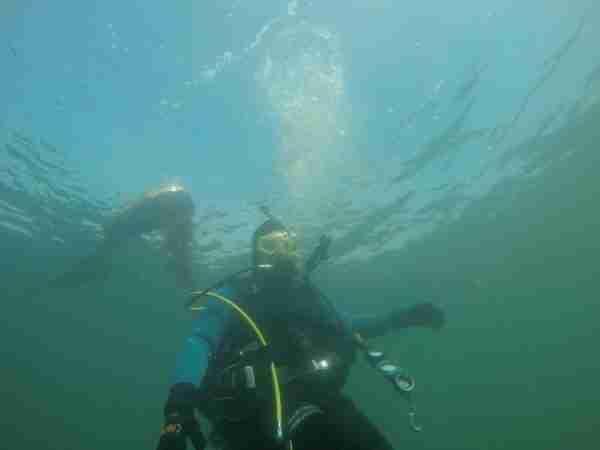 Diver near surface Rockaway-Beach
