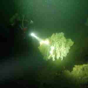 Cloud Sponge at Sund Rock