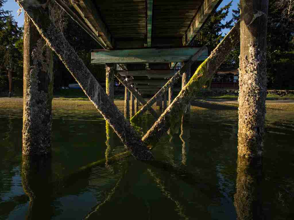 Pilings in Eagle Harbor