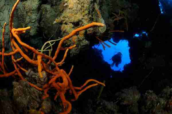 Diving Gardens Of The Queen Marine Park Cuba