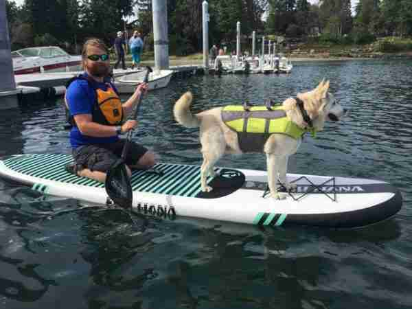 Dog and Paddle Board